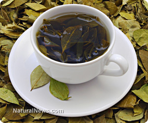 Herbal tea key to relieving depression and stress