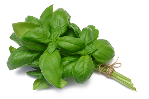 HEALTH BENEFITS OF HOLY BASIL- This herb has been the go-to remedy for all sorts of bodily conditions, as well as ailments of the mind and spirit.