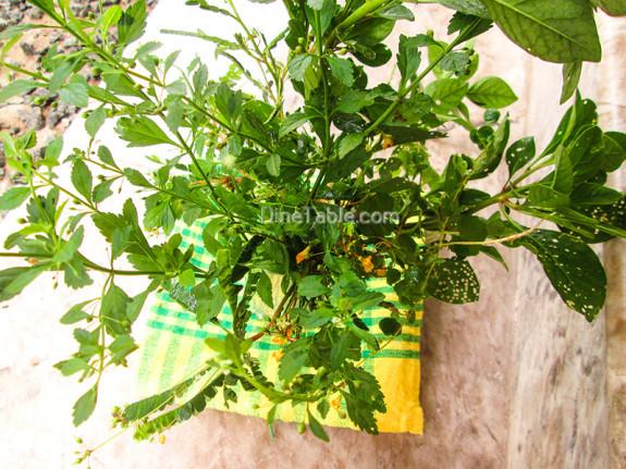 Karkkidaka Kanji Recipe - കര്ക്കിടക ഔഷധക്കഞ്ഞി - Medicinal plants