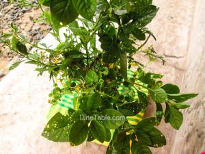 Karkkidaka Kanji Recipe - കര്ക്കിടക ഔഷധക്കഞ്ഞി - Porridge with herbal ingredients