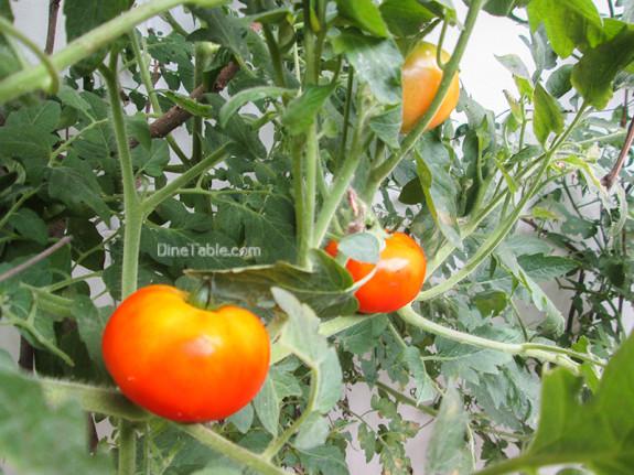 tomato-curry-recipe