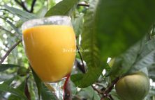 Egg Fruit Milkshake / Easy Shake